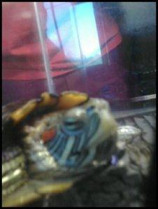 Bubbles smiling :)