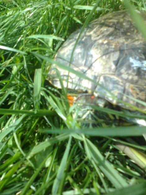 Sandy hiding :D
